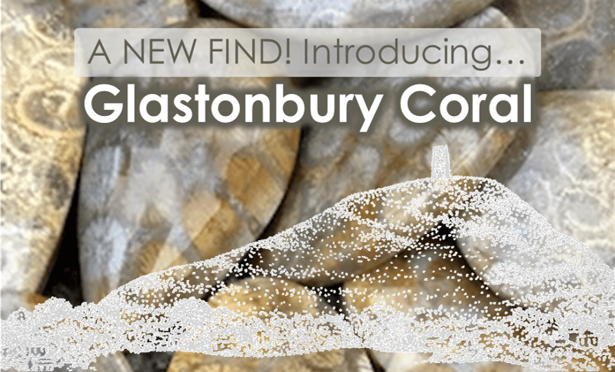 Glastonbury Coral Reef - A New Find!